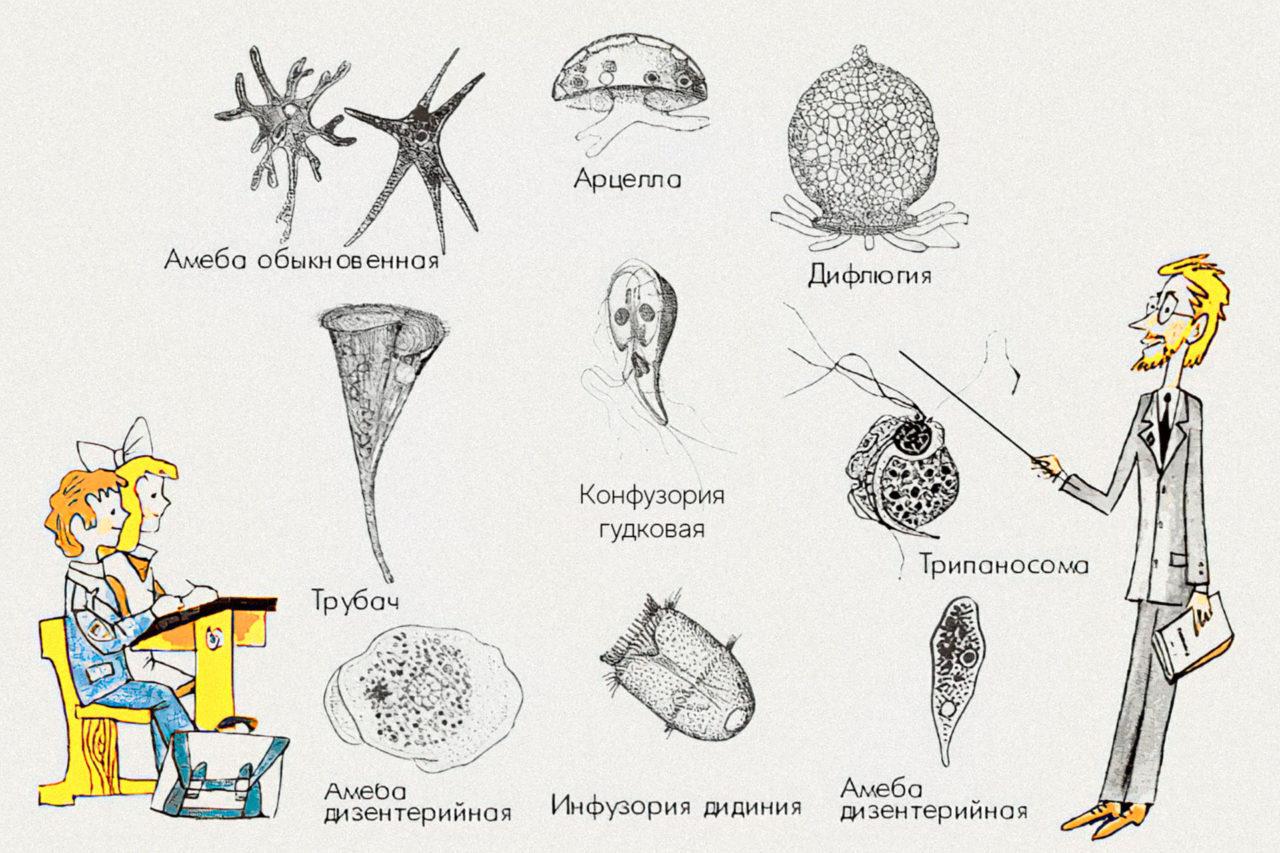Гудологика